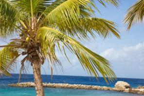 Mein Reiseziel: Karibik Kreuzfahrt mit der Mein Schiff Flotte