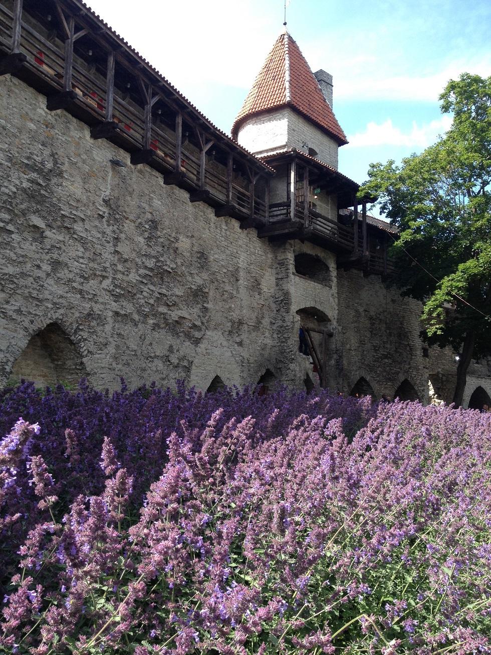 Reise durch die Zeit: vorbei an den historischen Stadtmauern in Tallinn