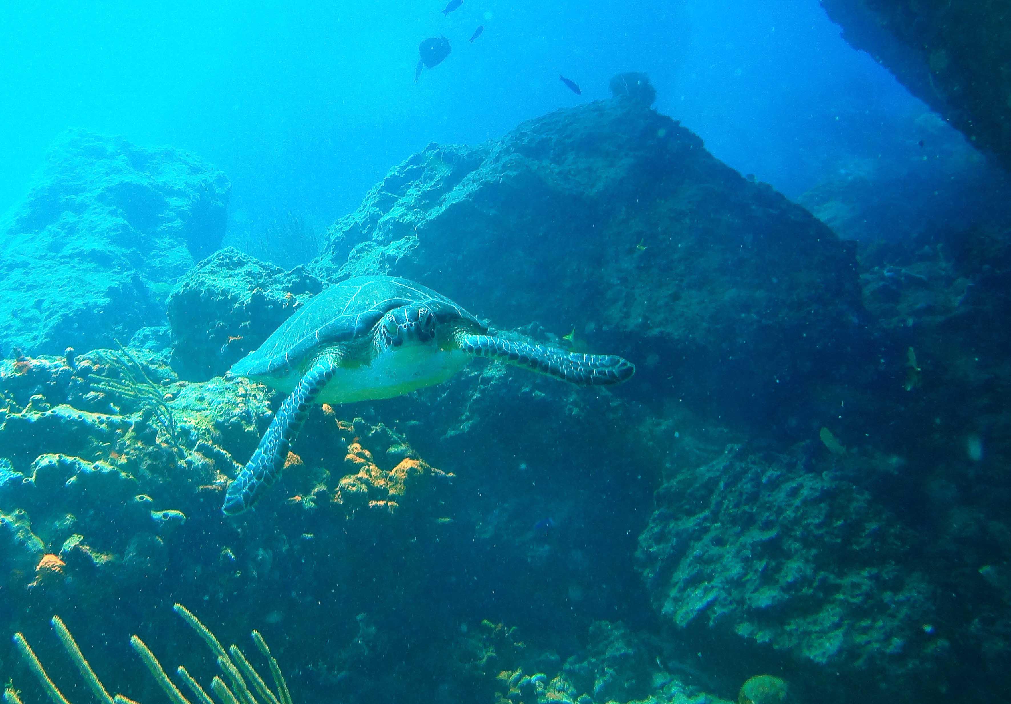 Unterwasserabenteuer auf St.Maarten
