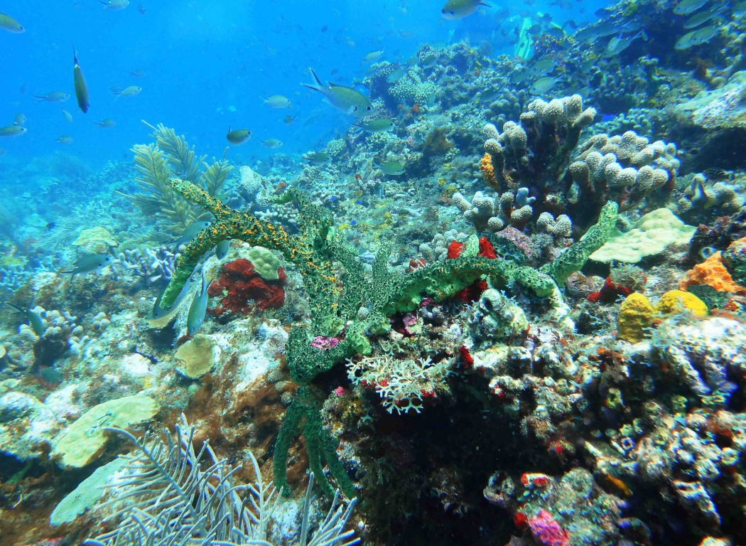 Fantastischer Blick auf ein Korallenriff beim Mein Schiff Tauchausflug