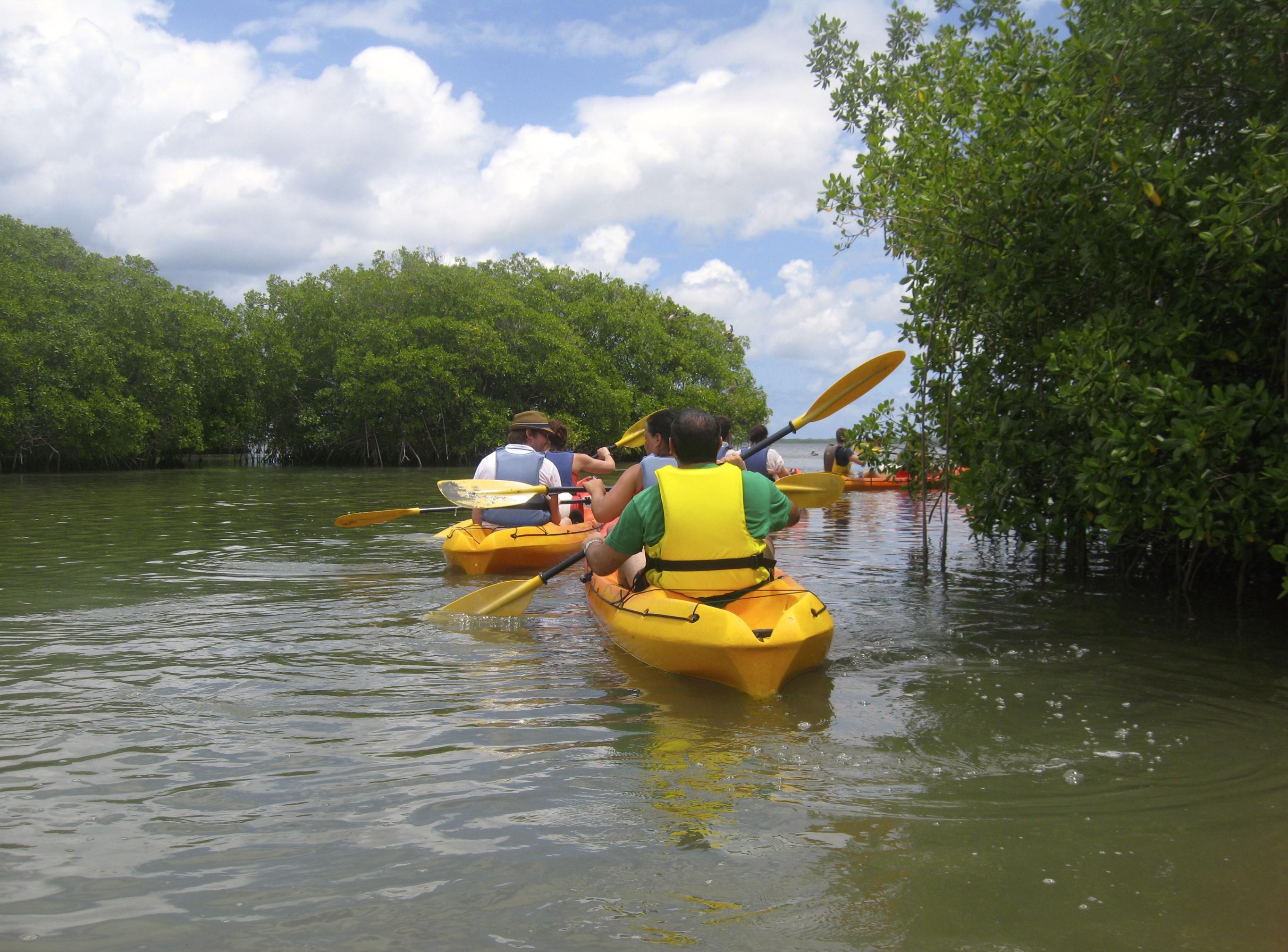 Mein Schiff Grün & Fair Ausflug: Mit dem Kajak durch die Mangroven in Guaeloupe