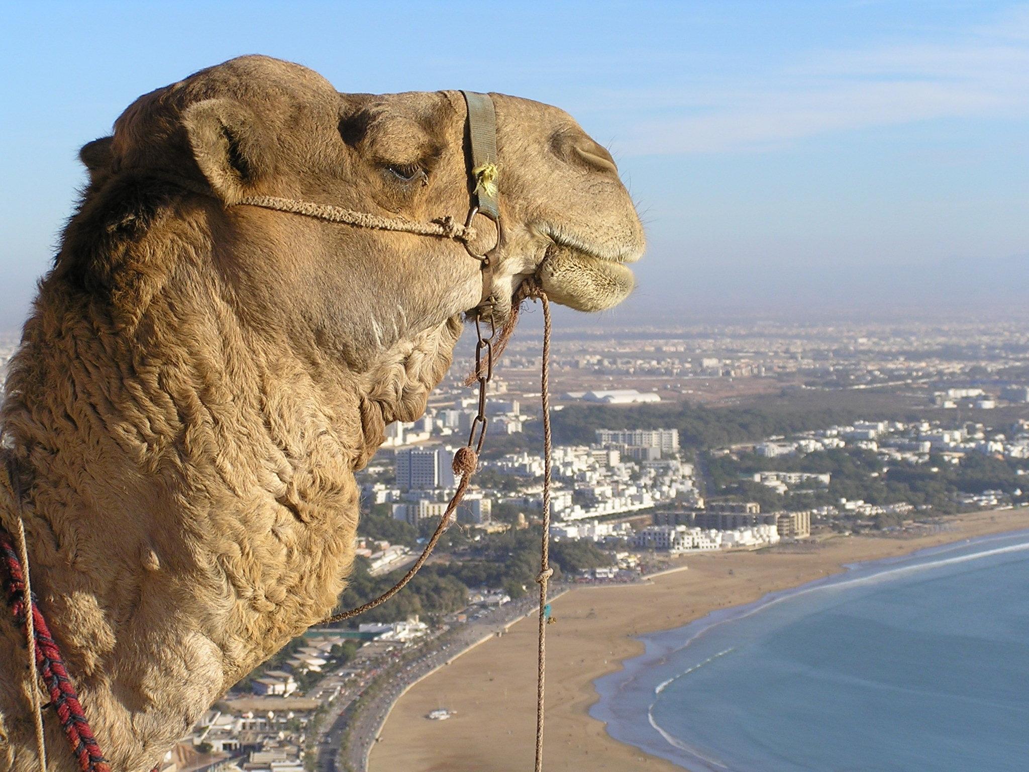 Blick aufs Mein Schiff Reiseziel Agadir