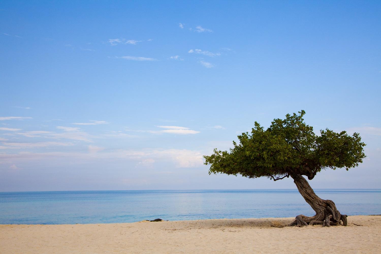 Der Eagle Beach auf Aruba