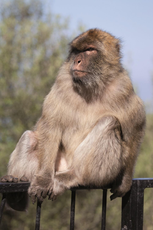 Gibraltar - Tierische Bewohner auf dem Affenfelsen