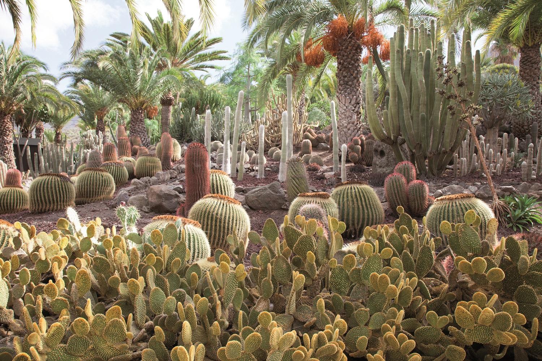 Das grüne und fruchtbare Tal von Agaete