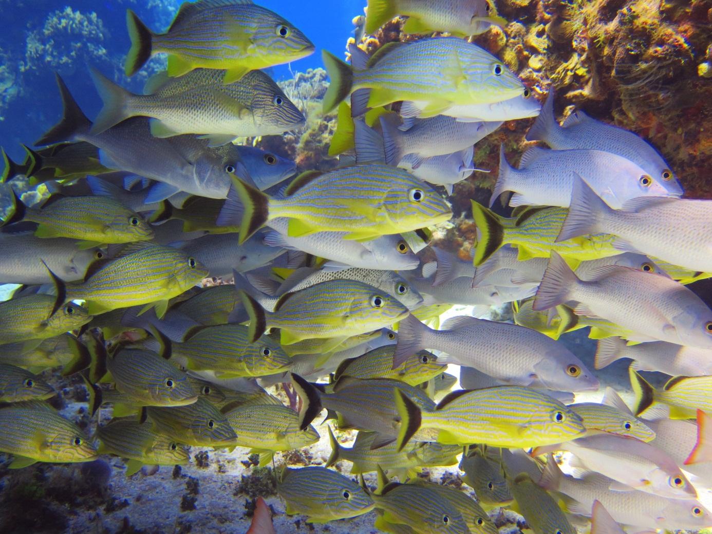 Die bunte Fischwelt beim Tauchen in MIttelamerika