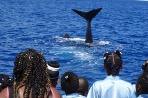 Grün & Fair Spendenprogramm von TUI Cruises mit neuer Rekordmarke