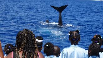 TUI Cruises unterstützt verschiedene Walschutzprojekte