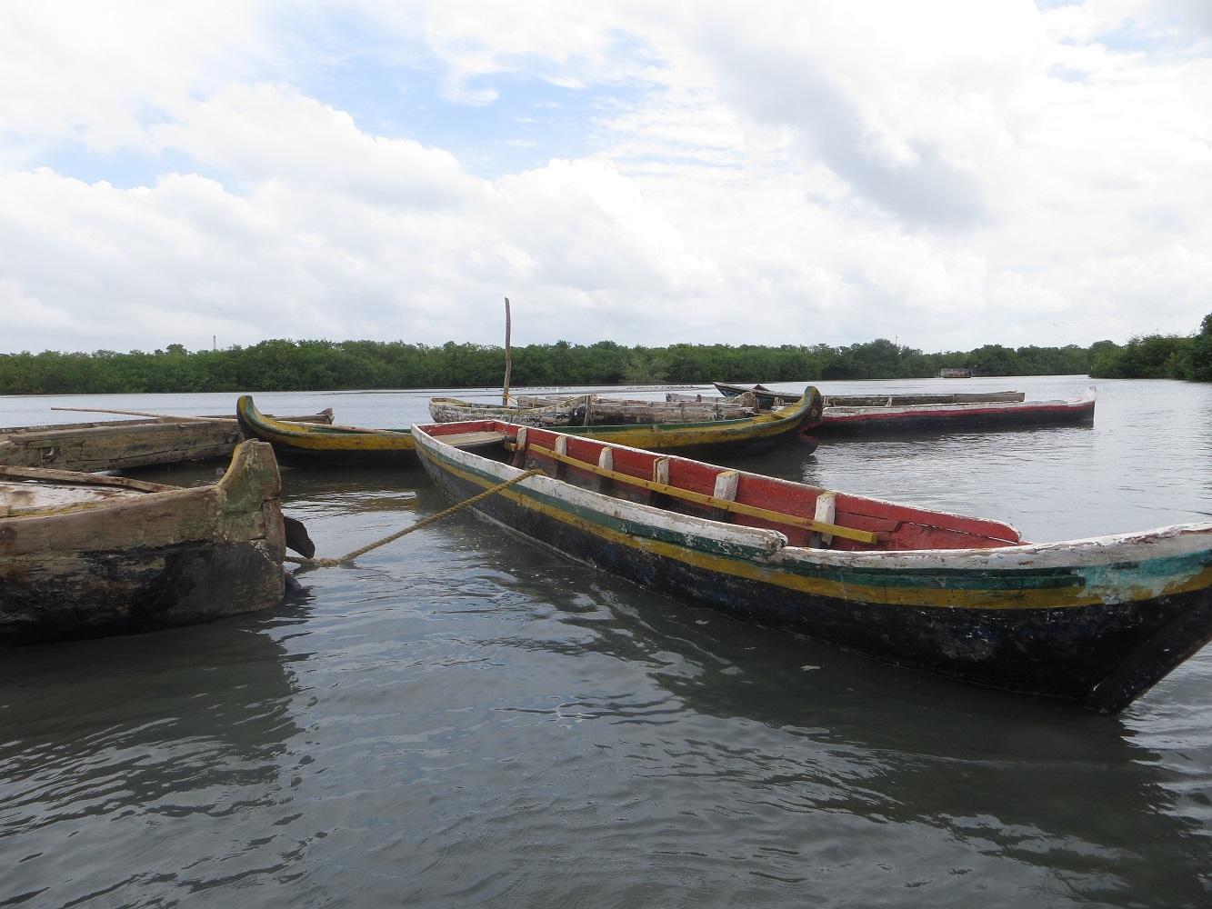 Mein Schiff Ausflug: Kanufahrt in Mangrovenwäldern von Kolumbien