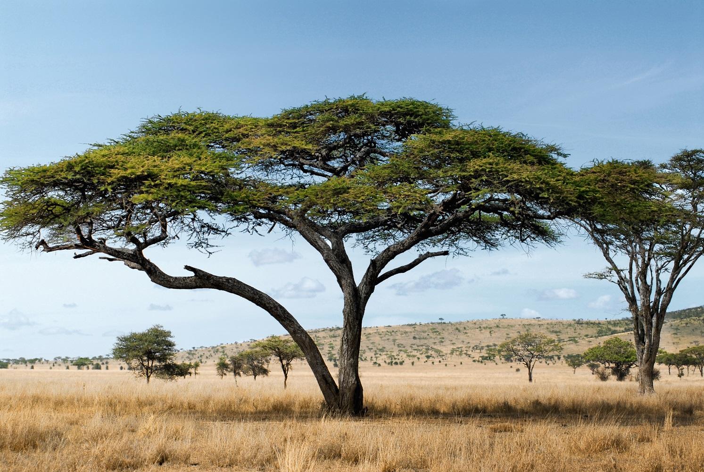Mein Schiff Ausflug: In der Savanne des Serengeti National Parks