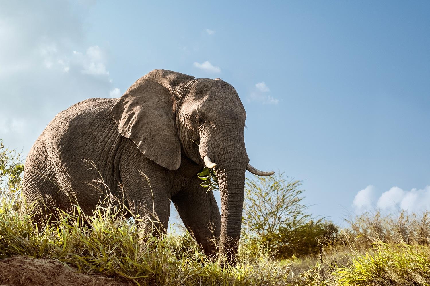 Mein Schiff Ausflug: Elefanten entdecken in Südafrika
