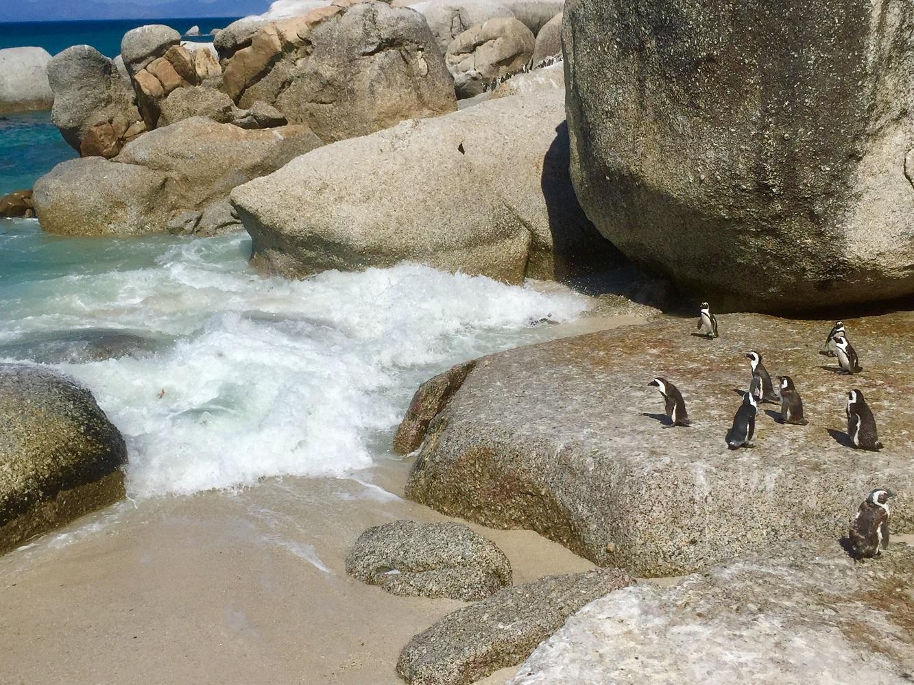 Mein Schiff Ausflug: Pinguine am Boulders Beach in Südafrika