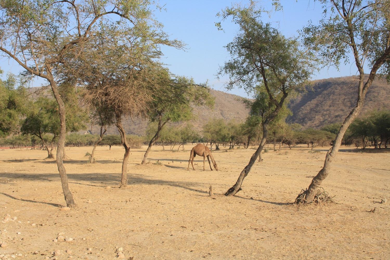 Das Wadi Darbat vom Mein Schiff Reiseziel Salalah - hier leben wilde Kamele