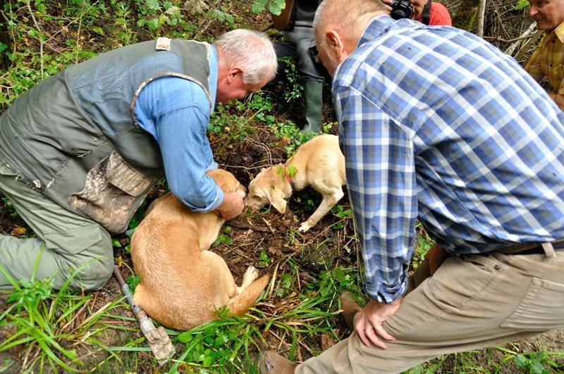 Auf Trüffelsuche mit einem speziell ausgebildeten Suchhund