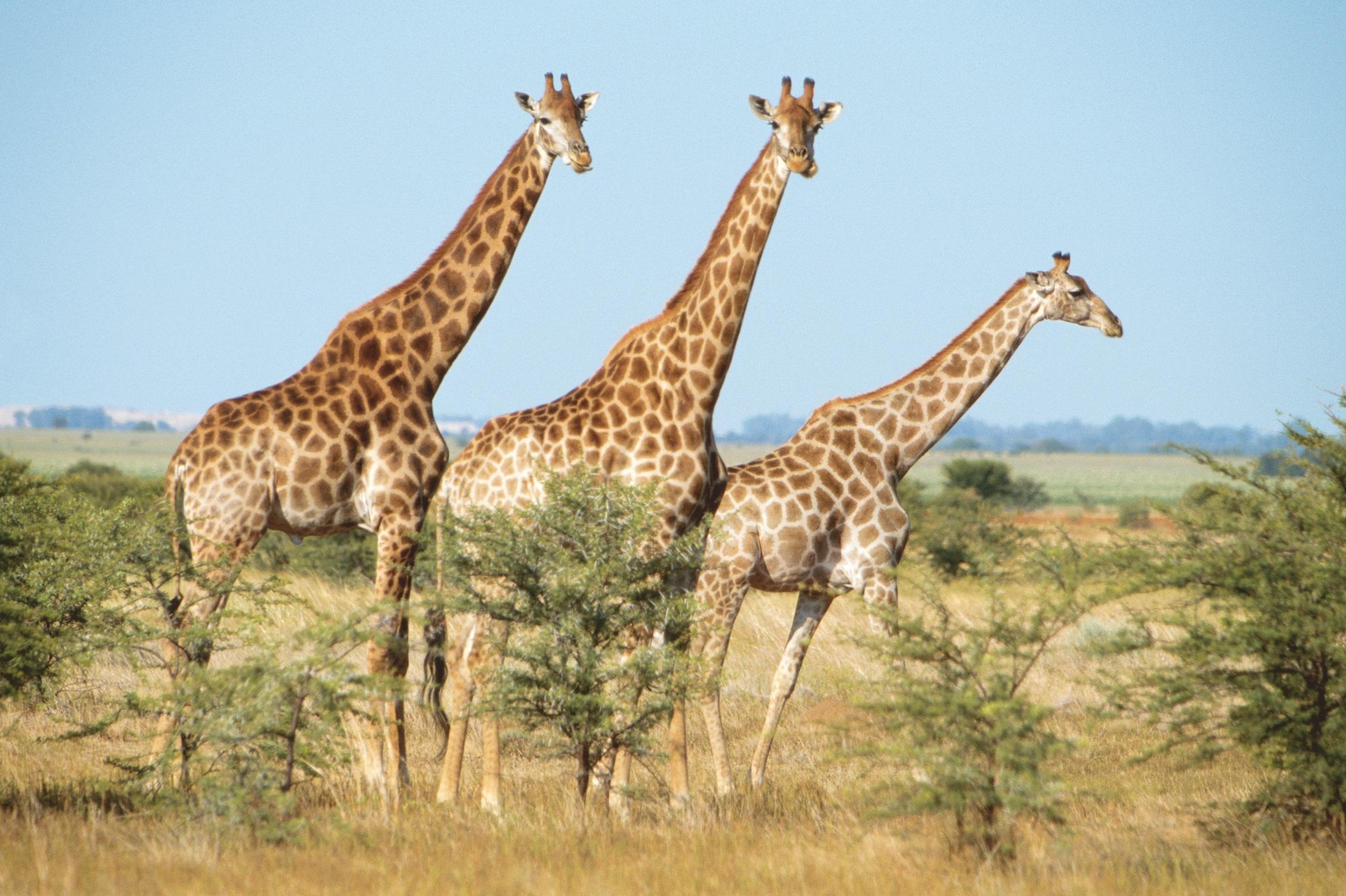 Hakuna Matata – Mit Mein Schiff Herz auf abenteuerlicher Safari in Port Elizabeth